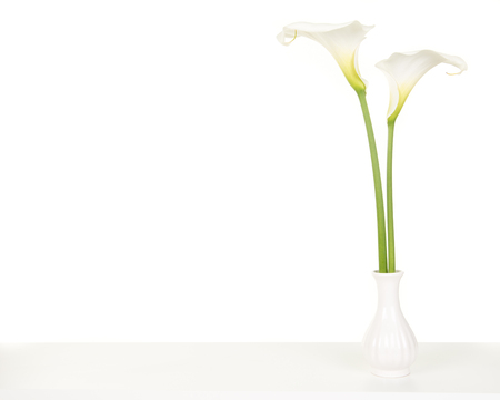 Two pretty white calla lilies on a white shelf in a white vase on a white background