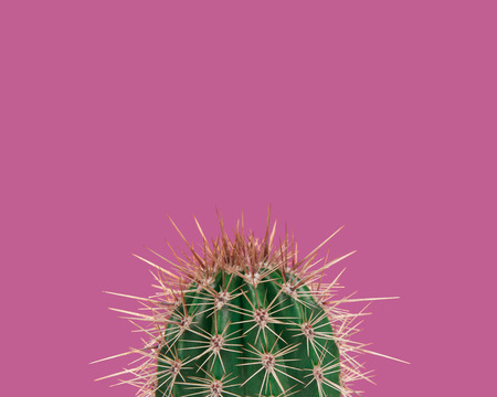 Green prickly cactus on a neon pink background
