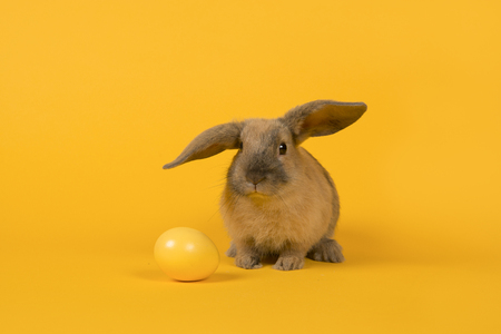 Cute young rabbit with a yellow egg on a yellow background Zdjęcie Seryjne