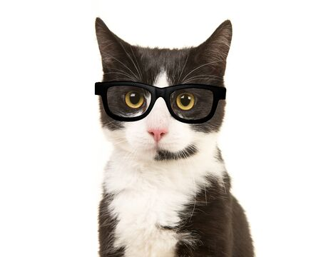 Black and white cat portrait facing the camera wearing black glasses isolated on a white background