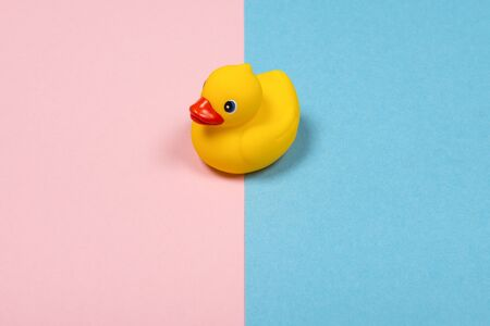 Yellow duckling crossing over the line with pink and blue as a traditional sign for boy or girl as a concept of gender neutrality in children and babies 版權商用圖片