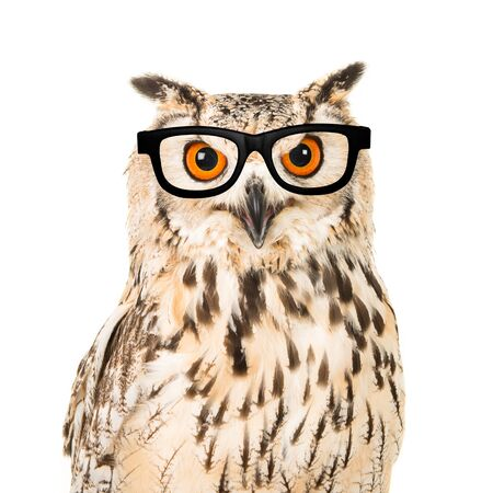 Portrait of an eagle owl with black glasses seen from the front on a white background