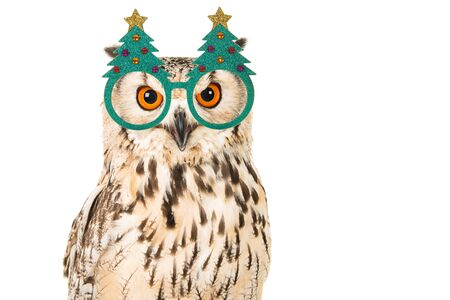 Portrait of an eagle owl with chrismas tree glasses on a white background