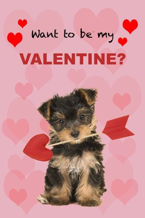 Valentine's day greeting card with cute sitting valentine yorkshire terrier, yorkie puppy looking at the camera holding a love arrow with the text want to be my Valentine?