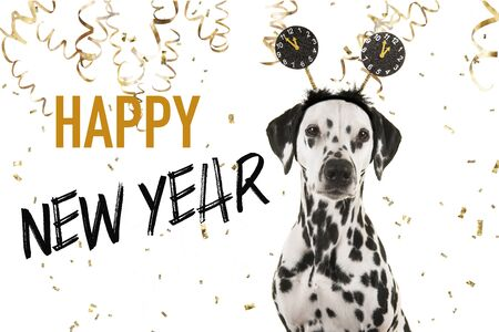 Portrait of a pretty dalmatian dog wearing a new year diadem looking at the camera on a white background with golden party garlands and text happy new year