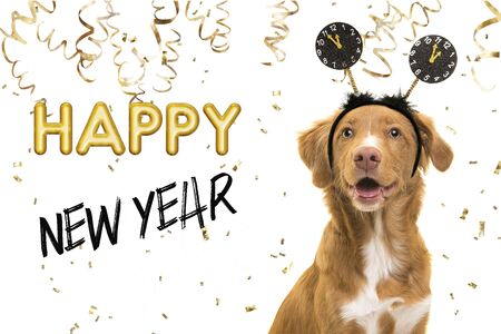 Portrait of a pretty nova scotia duck tolling retriever dog wearing a new year diadem on a white background with golden party garlands and text happy new year 2021 Stock Photo