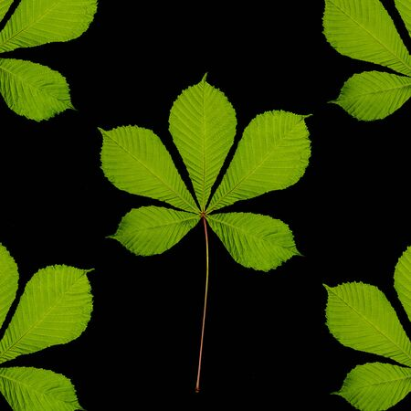 Fresh green chestnut tree leaf design on a black background Stockfoto