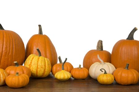 Group of orange pumpkins on a white background with copy space