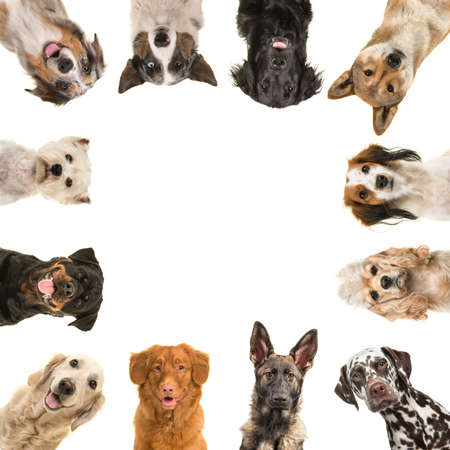 Portraits of different kind of breeds of dogs looking at the camera in a square with copy space in the middle isolated on a white background