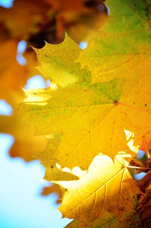 Autumn leaves in shallow focus