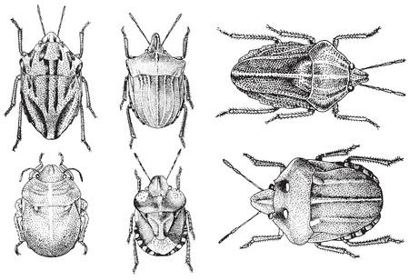 白い背景で隔離のベクトル昆虫のコレクション