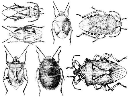 Sammlung von Insekten isoliert auf weißem Hintergrund Illustration