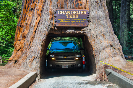 REDWOOD NP, CALIFORNIA - MAY 21, 2013  Famous attraction of the Redwood National Park - a drive through tree