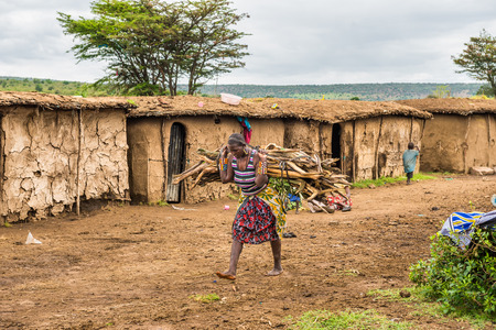 northern african: MASAI MARA, KENYA - OCTOBER 17, 2014: African woman from Masai tribe carrying a bunch of wood in her village. The Maasai are a Nilotic ethnic group living in southern Kenya and northern Tanzania
