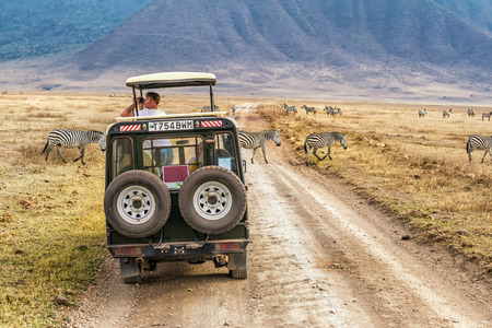 NGORONGORO, TANZANIA - OCTOBER 21, 2014 : Tourists watching zebras from a safari car in Ngorongoro conservation area. Ngorongoro Crater is a large volcanic caldera and a wildlife reserve.