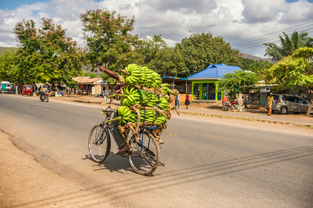 MTO WA MBU, ARUSHA, TANZANIA - OCTOBER 22, 2014 : African man traveling on a bike with a bunch of bananas