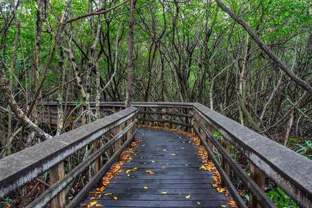 Everglades national park: Raised wooden boardwalk through the wetlands of Everglades National Park, Florida