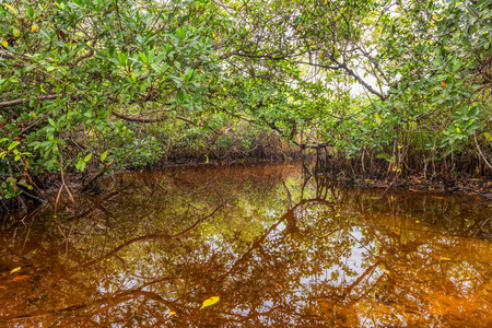 Everglades national park: Mangrove swamp in the Everglades National Park, Florida