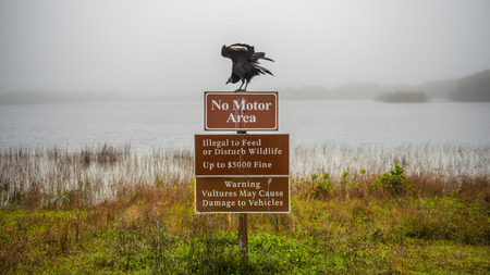 Everglades national park: Vultures warning sign with a vulture on top of it in the Everglades National Park, Florida