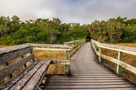 Everglades national park: Bench on a raised wooden boardwalk in the wetlands of Everglades National Park, Florida