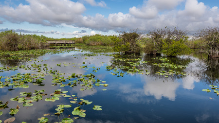 Everglades national park: Lake and boardwalk in the wetlands of Everglades National Park, Florida