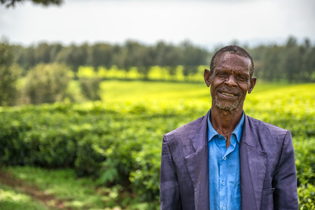 JIMMA, ETHIOPIA - MAY 2, 2015 : Ethiopian farmer on a tea plantation near Jimma, Ethiopia