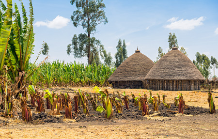 Traditional village houses near Addis Ababa, Ethiopia surrounded by crops