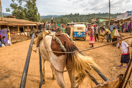 crowded street: MIZAN TEFERI, ETHIOPIA - MAY 2, 2015 : Horse pulling a cart accross a crowded street in Mizan Teferi, also called Mizan Tefere.