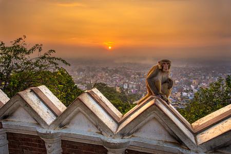 templo: Salida del sol sobre Katmand�, Nepal, visto desde el templo de Bankok. Swayambhunath es tambi�n conocido como el templo del mono, ya que hay monos sagrados que viven en partes del templo. HDR procesado. Foto de archivo