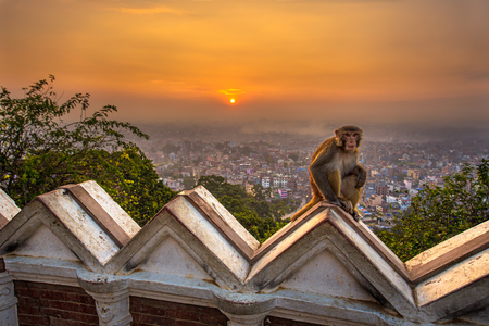 temple: Sunrise above Kathmandu, Nepal, viewed from the Swayambhunath temple. Swayambhunath is also known as the Monkey Temple as there are holy monkeys living in parts of the temple. Hdr processed. Stock Photo