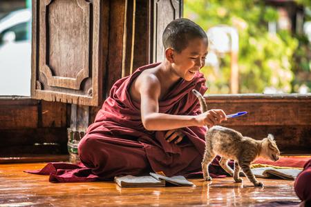 Nyaung Shwe, MYANMAR - 28 de enero, 2016: Sudeste Asiático niño monje se distrae por un gato de aprendizaje en el monasterio de Shwe Yan Phe. Foto de archivo - 53207831