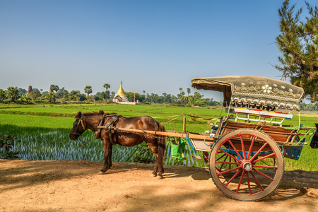 horse drawn: Horse drawn carriage  for an ancient temples tour in Myanmar