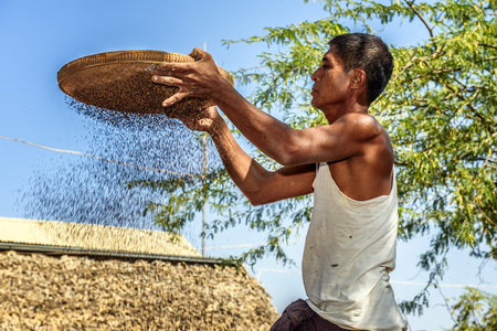 thresh: BAGAN, MYANMAR - JANUARY 24, 2016 :  Burmese farmer sifts grains during harvesting time to remove chaff Editorial
