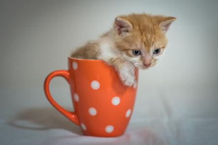 Cute little kitten in orange cup