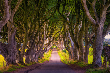 The Dark Hedges in Northern Ireland at sunset 免版税图像