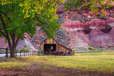 Historic barn with horses in the Capitol Reef National Park, Utah Standard-Bild - 127561308