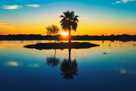 Palm tree silhouette with reflection in a lake at sunset, Namibia, Africa Standard-Bild - 127114932