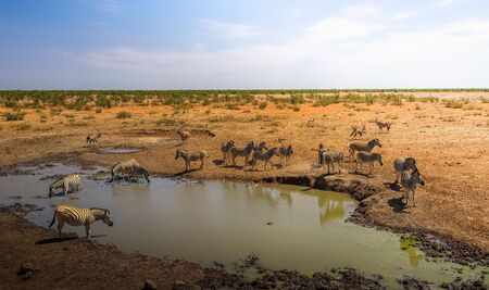 Herd of zebras and oryxes drinking water in Etosha National Park, Namibia