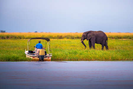 Tourists in a boat observe an elephant along the Chobe River, Botswana, Africa 에디토리얼