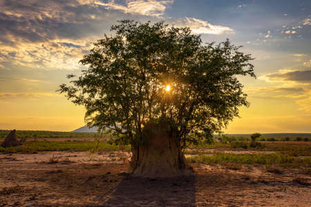 Sunset behind a tree growing out of a large termite mound in Namibia