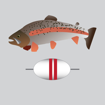 rainbow trout: Trout fish vector original design background picture Illustration