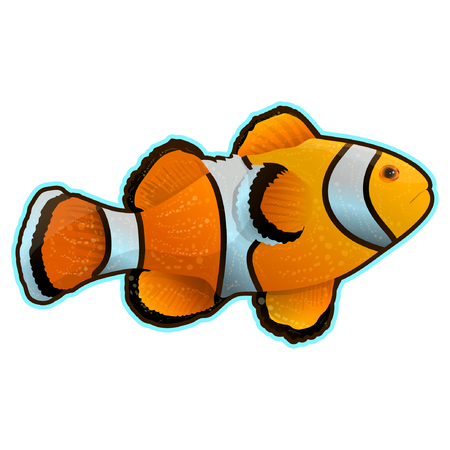 Anemone fish isolated on white. Clownfish in yellow, black and white Clownfish in yellow, black and white colors. Aquarium fish realistic vector illustration in flat style design