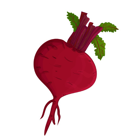 Beet. Realistic vegetable Vector illustration Standard-Bild - 104726360