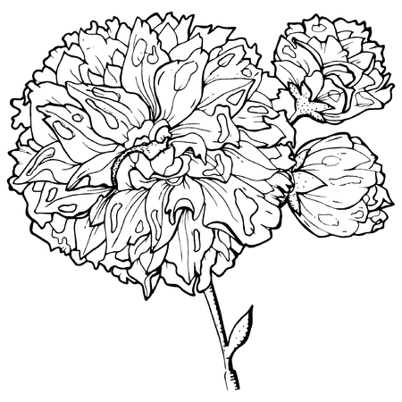 flower etching style vector eps10  イラスト・ベクター素材