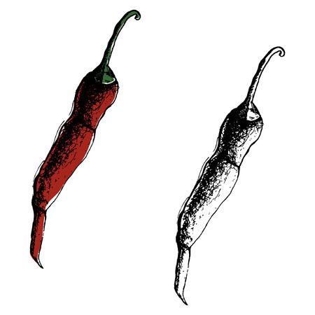 Chili Pepper hand drawn vector illustration. Vegetable artistic style object. Isolated hot spicy mexican pepper, sliced and crushed pieces, seed. Detailed vegetarian food drawing. Farm market Paprika eps10 Standard-Bild - 110199868