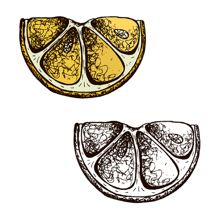 Lemons black line drawn on a white background. Vector drawing of fruits. Abstract spots. Colored lemons eps10