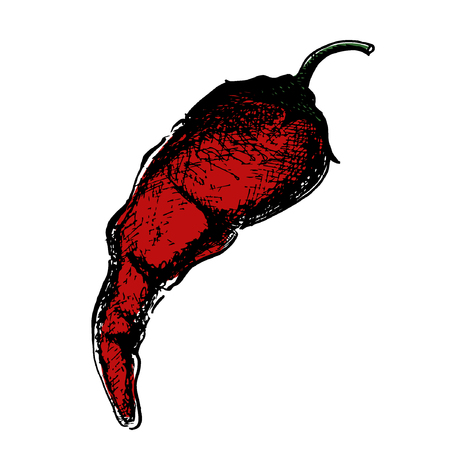 Chili Pepper hand drawn vector illustration. Vegetable artistic style object. Isolated hot spicy mexican pepper, sliced and crushed pieces, seed. Detailed vegetarian food drawing. Farm market Paprika eps10 Standard-Bild - 110199884