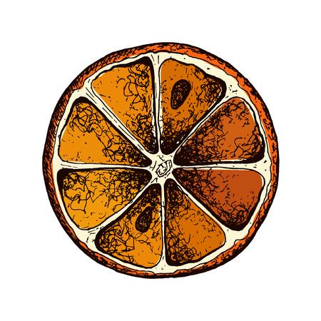 Vector oranges hand drawn sketch. Sketch vector food illustration. Vintage style eps10 Standard-Bild - 110199887