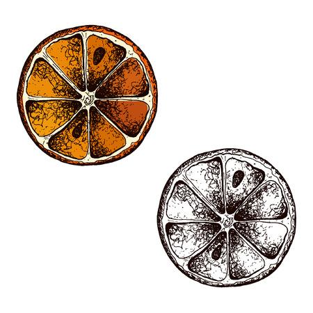 Wektor pomarańczy ręcznie rysowane szkic. Szkic ilustracji wektorowych żywności. Styl vintage eps10