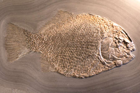 Fish fossil on sand stone background Imagens